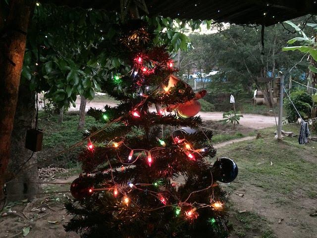 Weihnachtsbaum in Costa Rica