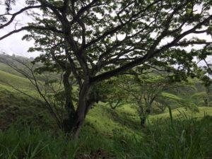 Baum pflanzen mit bntree